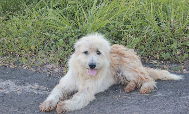 BonBon, la historia del perro que espera a su familia durante cuatro años a pie de carretera