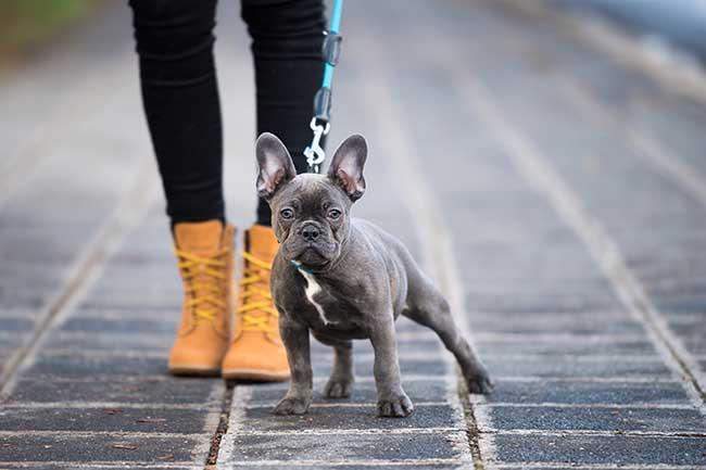 Esta es tu relación con tu mascota en función de tu signo zodiacal