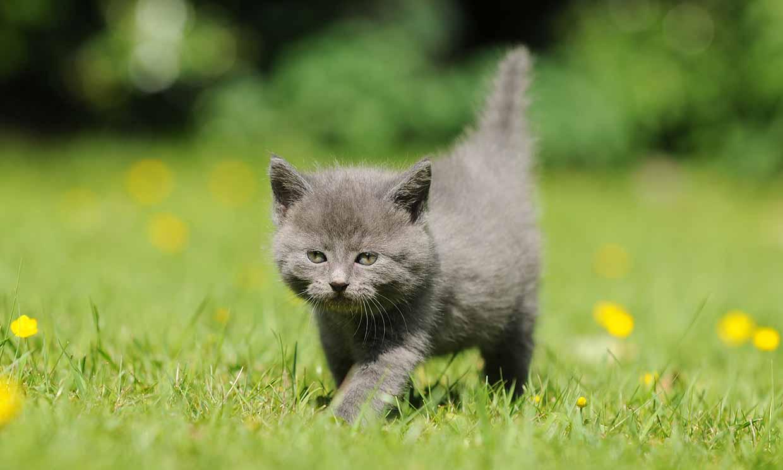 ¿Qué pasaría si le pones una pulsera de actividad a tu gato? Esta mujer lo ha probado