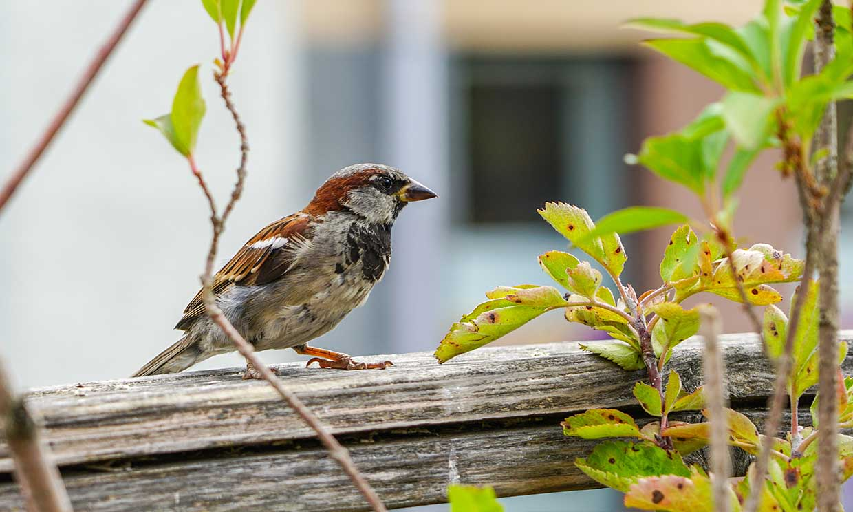 ¿Dónde están los pájaros? Así es como la contaminación está acabando con las aves urbanas