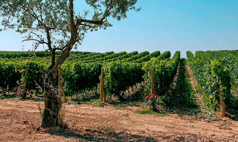 Esta bodega española será la más sostenible de Europa