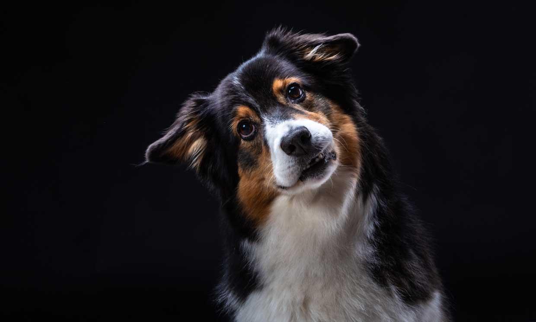 Un perro se comunica con sus dueños mediante un método revolucionario