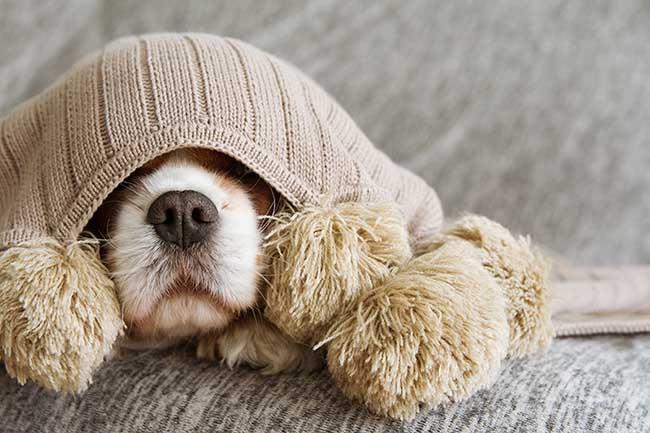 Perros: El invierno también llega para tu mascota, lo que debes tener en  cuenta para pasearlo con frío