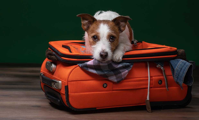 Consejos para viajar en avión con tu perro