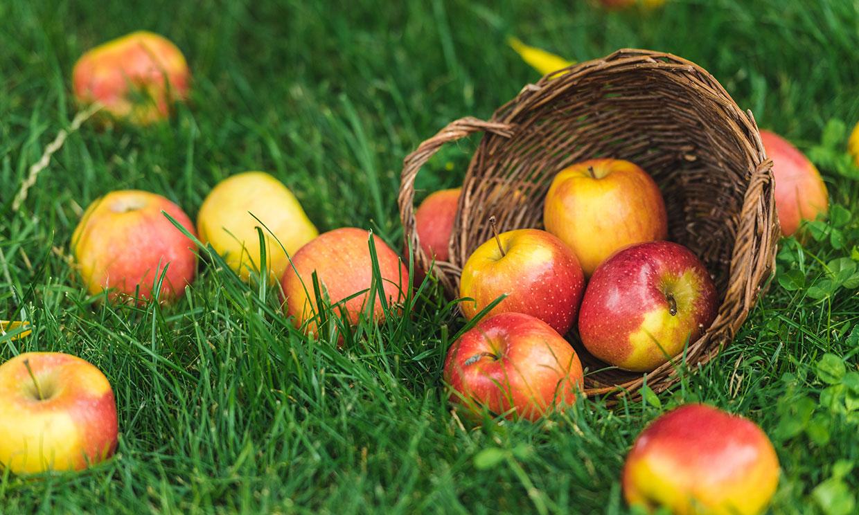 Dos manzanas al día, el mejor tratamiento para mantener a raya el colesterol