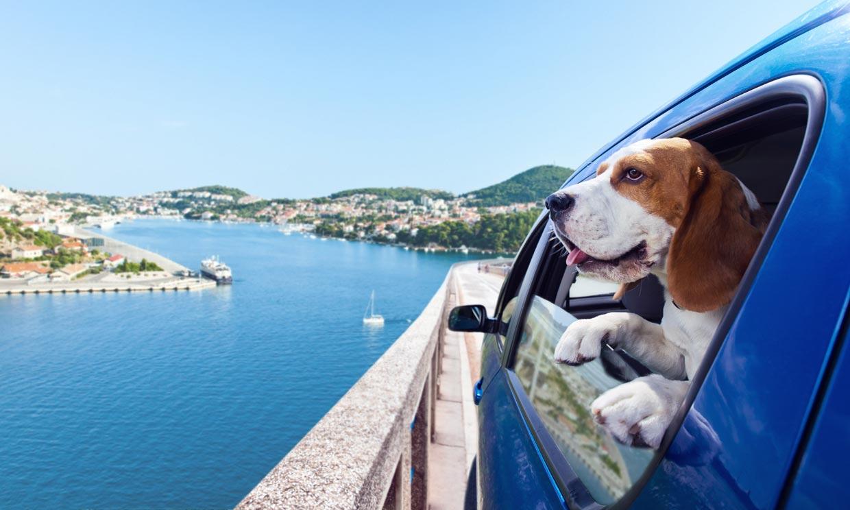 ¿Sabes cuál es el mejor destino turístico de España para viajar con perros?