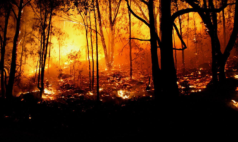 Las devastadoras consecuencias de los incendios de Australia