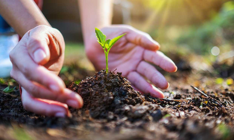 No todos los productos vegetales son respetuosos con el medio ambiente