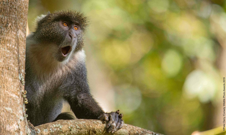 ¡No te pierdas las imágenes más divertidas del reino animal!