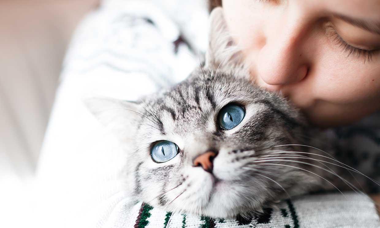 Qué significados puede tener el maullido de tu gato