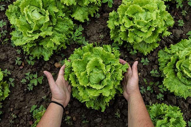Claves que hacen de la agricultura ecológica una defensora del medio ambiente