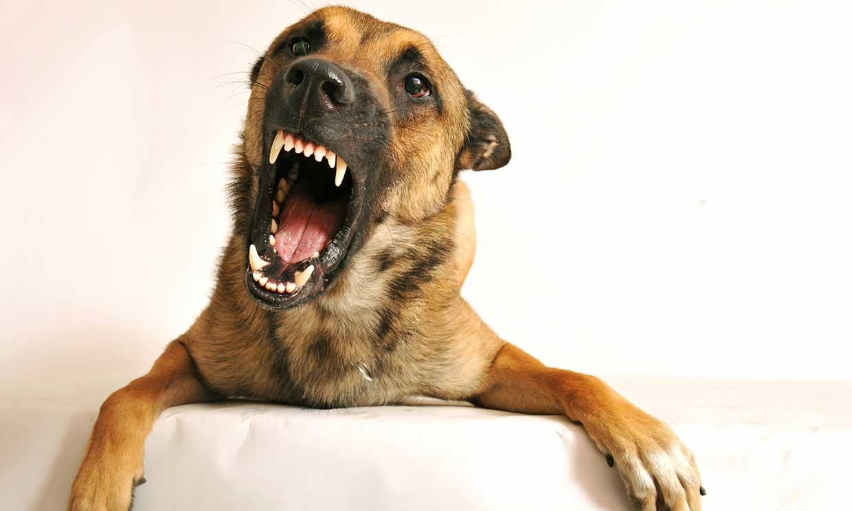 Mi perro se muestra agresivo con otros canes, ¿qué puedo hacer?