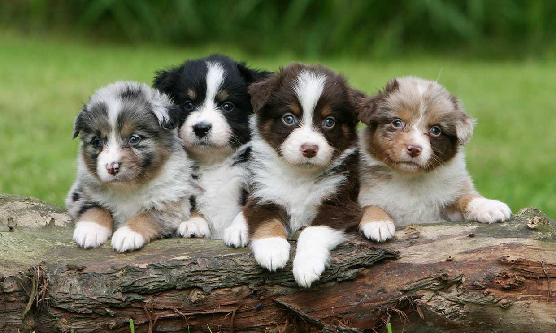 ¿Cuáles son los perros más difíciles de mantener?