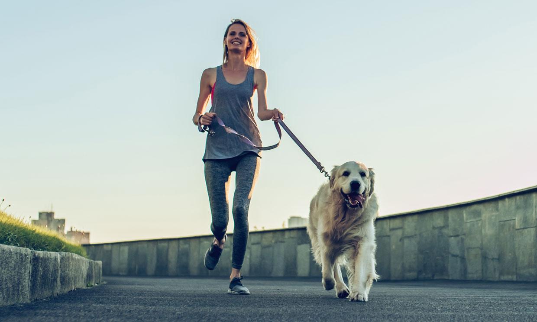 Razas de perro: Cuánto ejercicio puedo hacer con mi perro en el  desconfinamiento