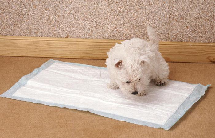 Perros: Cómo enseñar a mi cachorro a hacer pipí