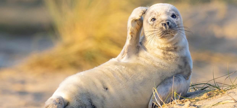 ¡Para partirse de risa! Las imágenes más divertidas del reino animal