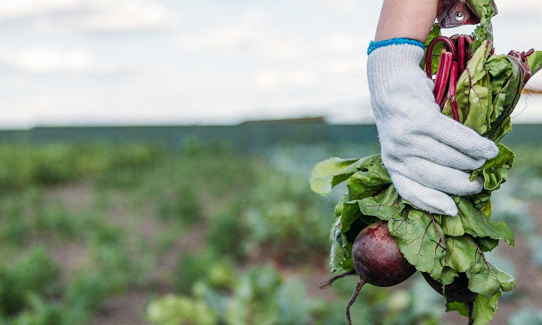 'De la granja a la mesa': la nueva estrategia de alimentación sostenible