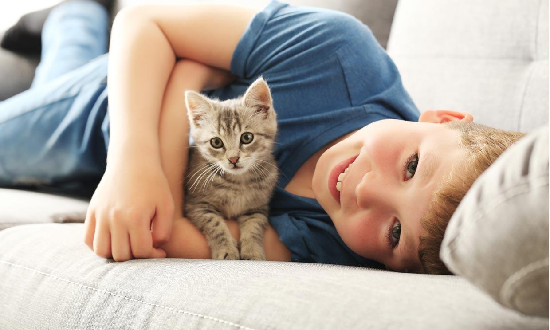 ¿Cuáles son las mejores razas de gato para convivir con niños?