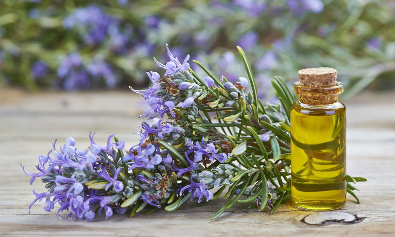 Remedios caseros para golpes, picaduras y otros problemas de salud en verano