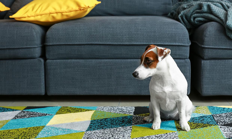 Si tu mascota necesita adelgazar, ayúdale a que pierda peso sin sufrir