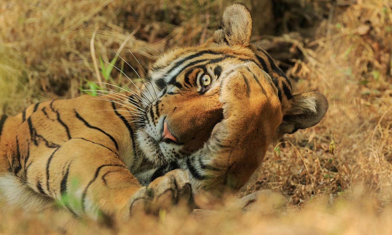 ¡Desternillantes! Estas fotografías de animales te sacarán más de una sonrisa