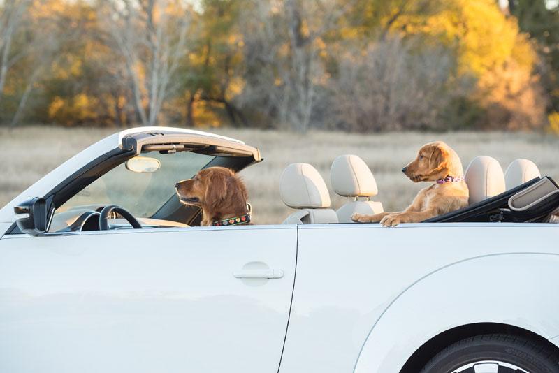 Perros, gatos, caballos riendo... imágenes de mascotas para partirse de risa