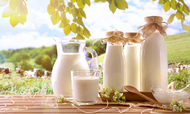 De vaca, de cabra o de oveja: ¿cuáles son las diferencias entre estos tipos de leche?
