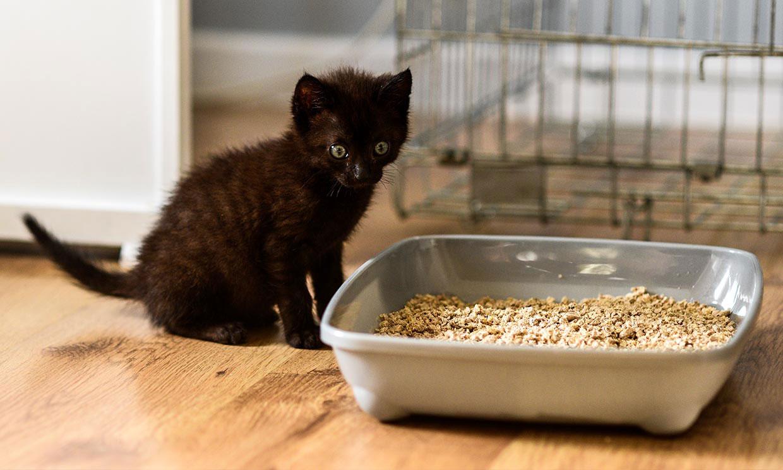 ¡Las hemos probado! Tipos de arena de gato y qué hacer para evitar el mal olor