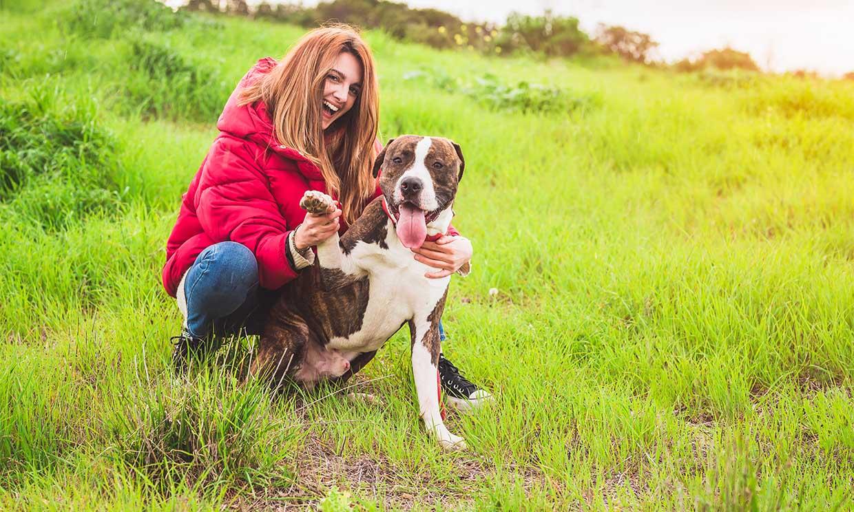 ¿Por qué no se debe humanizar a un perro?