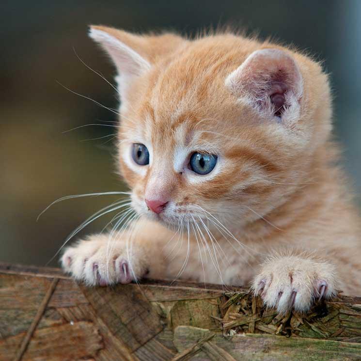 6 cosas que asustan a los gatos - Foto 1