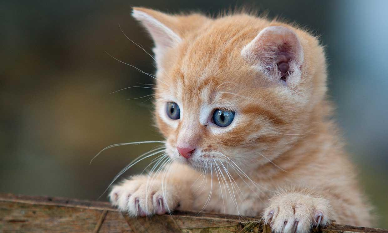 6 cosas que los gatos detestan