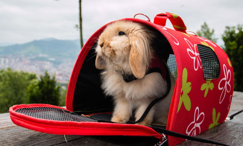Las razas de conejo más solicitadas como mascota