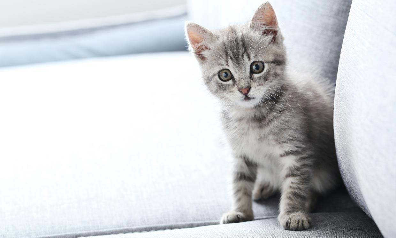¿Eres primerizo? Todo lo que debes saber si nunca has tenido un gato (y estás pensado en hacerlo)