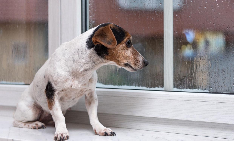 Esto es lo que siente tu perro cuando le dejas en casa solo