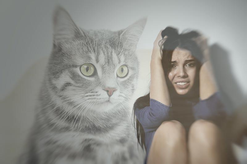 Ailurofobia: así se manifiesta el miedo a los gatos - Foto 1
