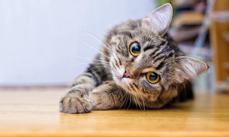 Ailurofobia: ¿has oído hablar del miedo irracional a los gatos?