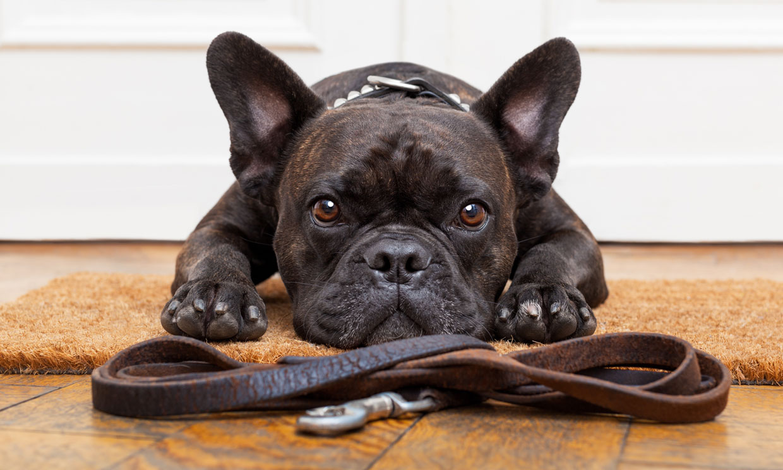 ¿Cómo enseñar a tu perro a no tirar de la correa?