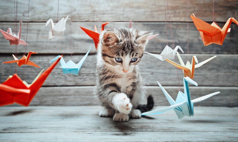Estas son las cosas que más les gustan a los gatos