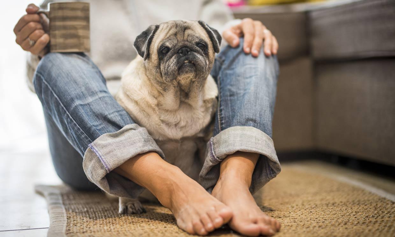 ¿Por qué mi perro se sienta sobre mis pies?