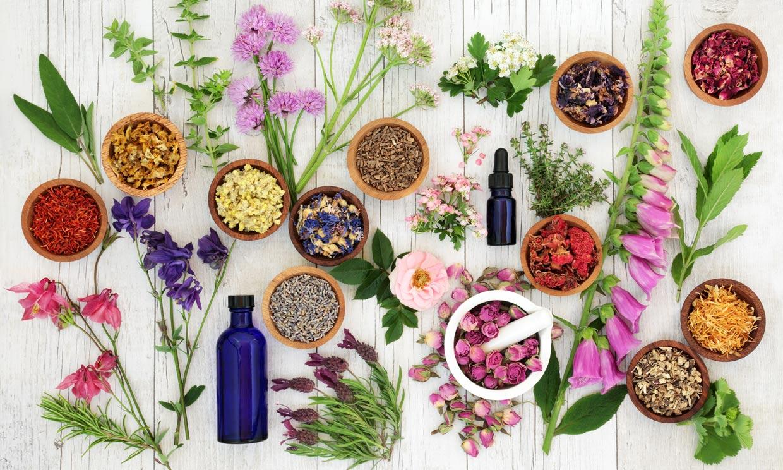 Plantas medicinales: cómo sacarles partido siguiendo estos consejos