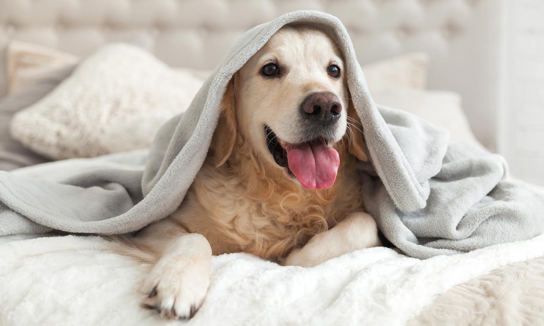 ¿Cuáles son las razones por las que tiemblan los perros?