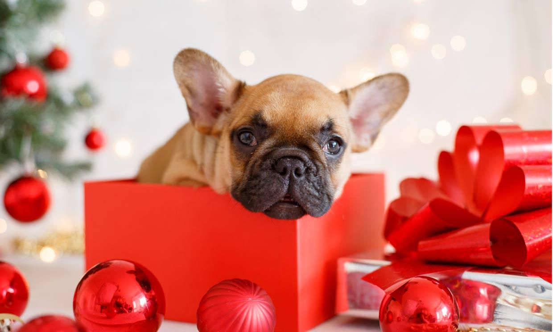 Regalar un perro o un gato en Navidad, ¿una buena idea?