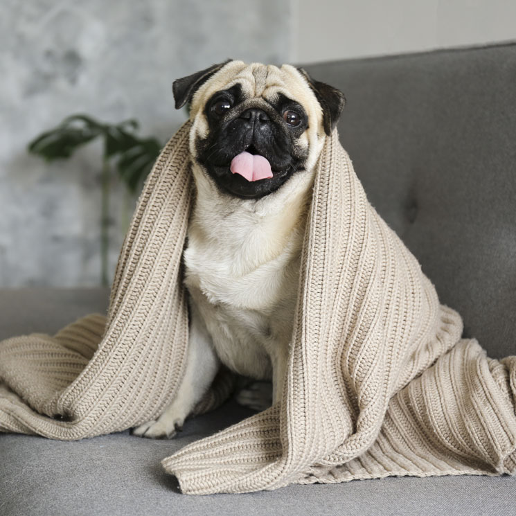 Sabes Que La Postura De Tu Perro Al Dormir Dice Cómo Se Siente Foto 1