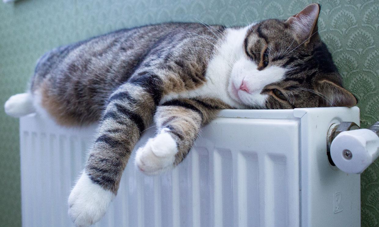 ¿Dudas si dejar a tu gato solo en casa por Navidad? Así se va a sentir