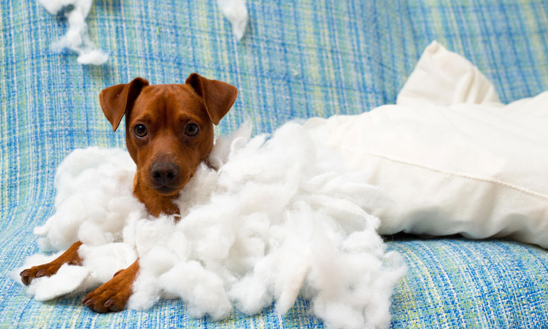 ¿Por qué mi perro cachorro lo muerde todo?
