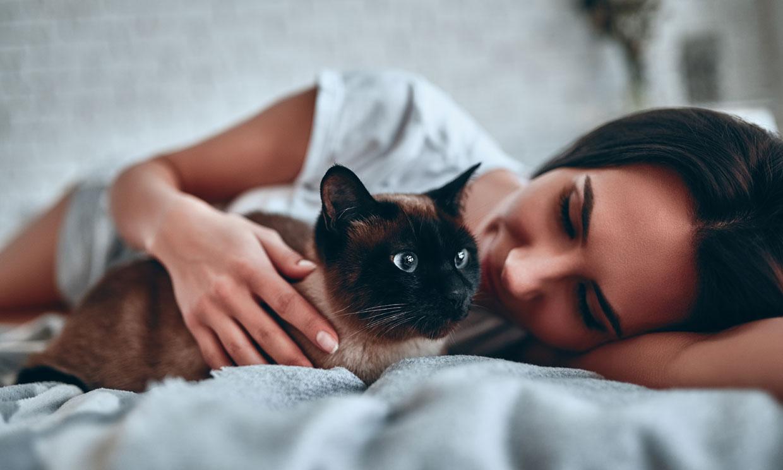 Este es el mejor método para educar a un gato sin regañarle ni castigarle