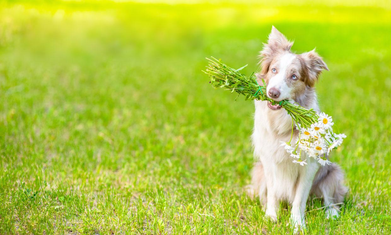Plantas medicinales y remedios que pueden ayudar a nuestras mascotas