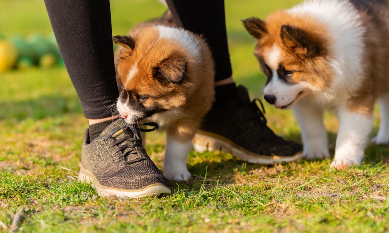 ¿Tu perro te muerde constantemente los pies? Averigua por qué lo hace