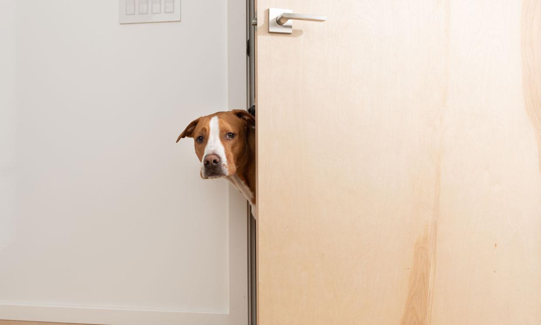 ¿Cómo evitar que tu perro tenga miedo y cómo ayudarle a superar sus terrores?