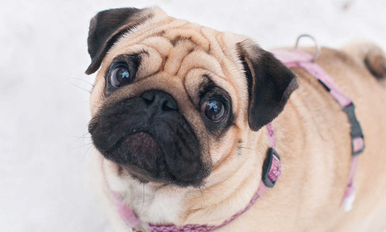Esta es la razón por la que tu perro te mira fijamente a los ojos